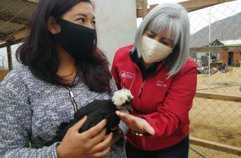 Destacan a mujeres de Punitaqui que continúan con sus emprendimientos pese a pandemia y sequía